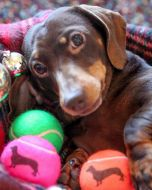 Price Dog Themed Tennis Ball Printed Loose